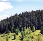 Выращивание леса