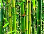 Изготовление тростниковых удилищ