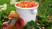 Сбор и заработок на грибах и ягодах