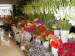 Бизнес План магазин цветочки